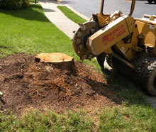 Steve Cairns Tree Services | Tree Lopping | Tree Removal | Mulching | Stump Removal | Hedge Trimming